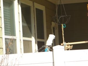 Neighbors Bird