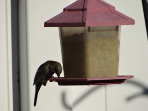 Captured A Bird Feeding